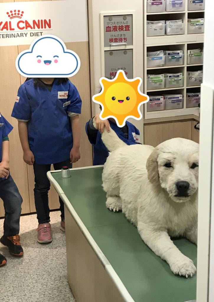 キッザニア東京 動物病院